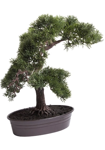 Botanic-Haus Kunstbonsai »Cedern Bonsai« kaufen