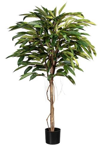 Creativ green Kunstbaum »Ficus Alii de Luxe« (1 Stück) kaufen