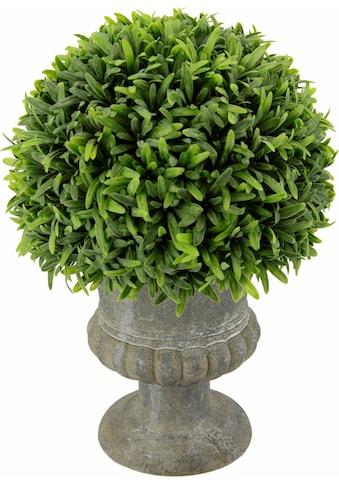 I.GE.A. Kunstpflanze »Grashalbkugel in Pokal 25 cm« (1 Stück) kaufen