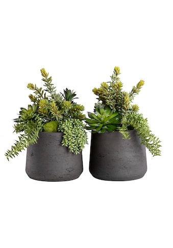 Blütenwerk Kunstpflanze »Duo Sukkulenten« (Set, 2 Stück) kaufen