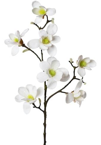Creativ green Kunstzweig »Zweig Magnolie« (1 Stück) kaufen