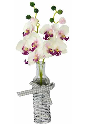 I.GE.A. Kunstpflanze »Orchideen in Weideglasvase« kaufen