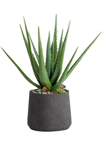 Blütenwerk Kunstpflanze »Aloe« kaufen