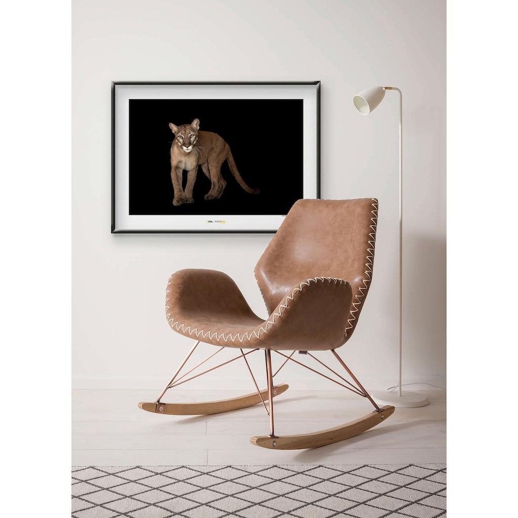 Komar Poster »Florida Panther«, Tiere, Höhe: 30cm