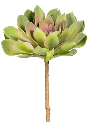 Creativ green Kunstpflanze »Sukkulente Echeveria« kaufen