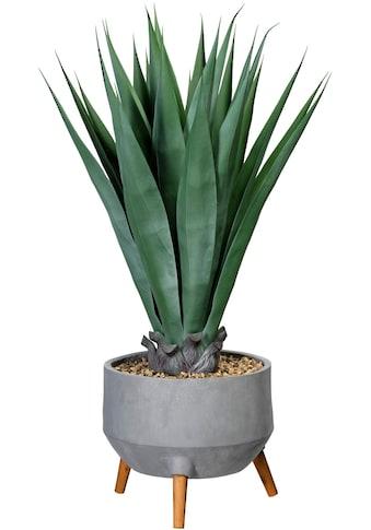 Creativ green Künstliche Zimmerpflanze »Agave«, in Fibreclayschale kaufen