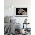 KOMAR Wanddekoration »Damara Zebra«