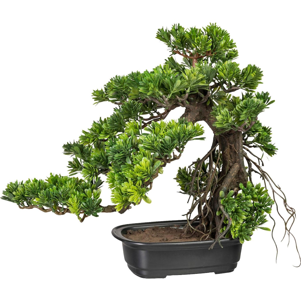 Creativ green Kunstbonsai »Bonsai Podocarpus« (1 Stück)