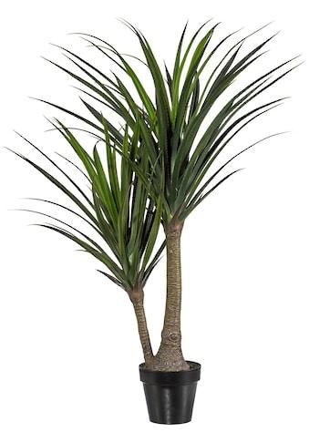 Creativ green Kunstpflanze »Pandanus«, im Kunststofftopf kaufen