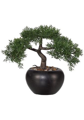 Creativ green Kunstbonsai »Bonsai Zeder« (1 Stück) kaufen