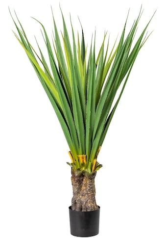Creativ green Künstliche Zimmerpflanze »Aloe« kaufen