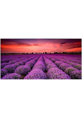 Art & Pleasure Holzbild »Lavender sunset« kaufen