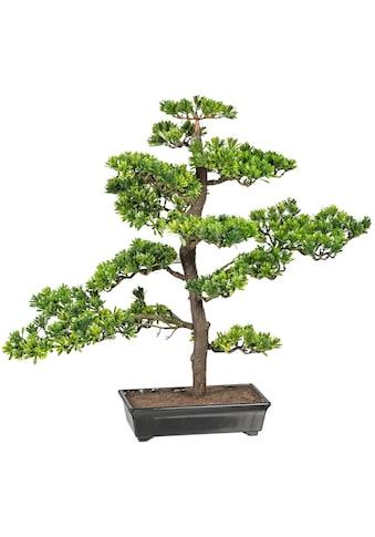 Creativ green Kunstbonsai »Bonsai Podocarpus« (1 Stück) kaufen