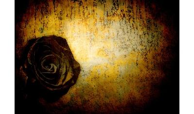CONSALNET Papiertapete »Schwarze Rose«, in verschiedenen Größen kaufen