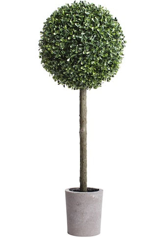 Botanic-Haus Kunstbaum »Buchskugelbaum« kaufen