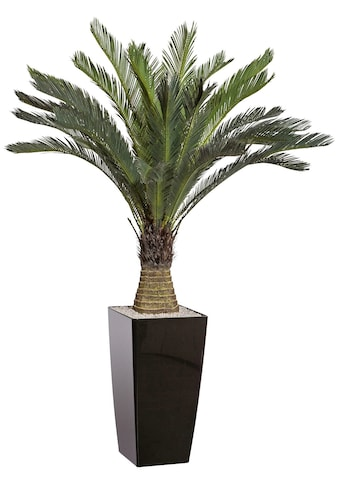 Creativ green Kunstpalme »Cycaspalme« (1 Stück) kaufen