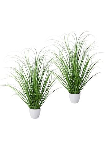 Creativ green Kunstgras »Grasbusch«, 2er Set, im dekorativen Kunststofftopf kaufen