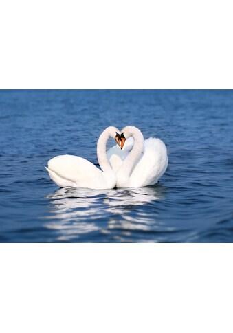 PAPERMOON Fototapete »Swan Love Couple«, Vlies, in verschiedenen Größen kaufen