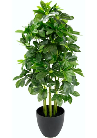 I.GE.A. Kunstpflanze »Schefflerapflanze« (1 Stück) kaufen