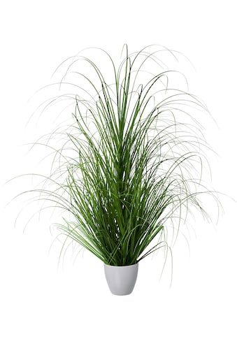 Creativ green Kunstgras »Grasbusch«, im dekorativen Kunststofftopf kaufen