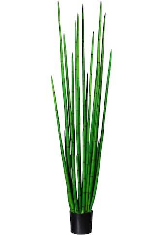 Creativ green Künstliche Zimmerpflanze »Sanseveria cylindrica« (1 Stück) kaufen