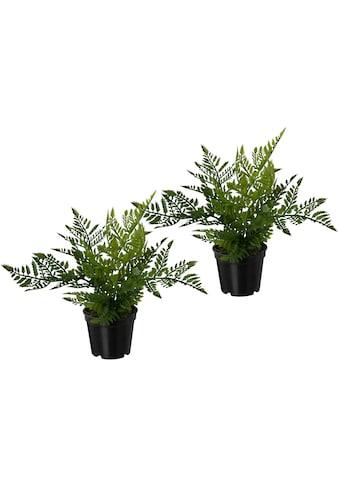 Creativ green Kunstpflanze »Farn« (3 Stück) kaufen