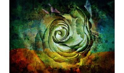CONSALNET Vliestapete »Grüne Rose«, in verschiedenen Größen kaufen