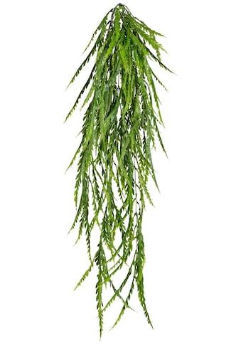 Creativ green Kunstranke »Asplenium - Hänger« (1 Stück) kaufen