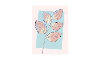 KOMAR XXL Poster »Cinderella Plant« kaufen
