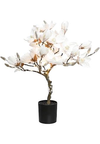 ,LED Baum»Magnolie«, kaufen