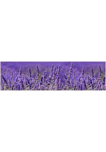 Küchenrückwand  -  Spritzschutz »profix«, Lavendel, 220x60 cm kaufen