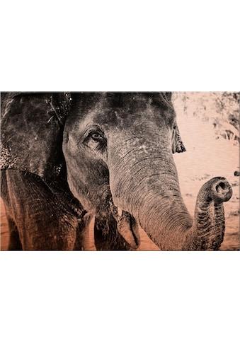Alu - Dibond - Druck »Indian Elephant« kaufen