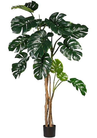 Creativ green Kunstpflanze »Splitphilodendron« (1 Stück) kaufen