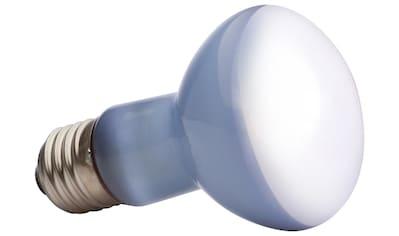 EXO TERRA Terrarienbeleuchtung »Daylight Basking Spot«, 25 W kaufen
