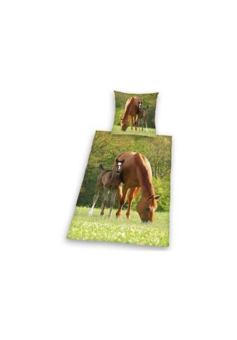 Herding Young Collection Kinderbettwäsche »Pferd mit Fohlen«, für Pferdefreunde kaufen