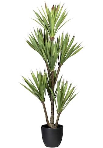 Creativ green Künstliche Zimmerpflanze »Yucca« kaufen