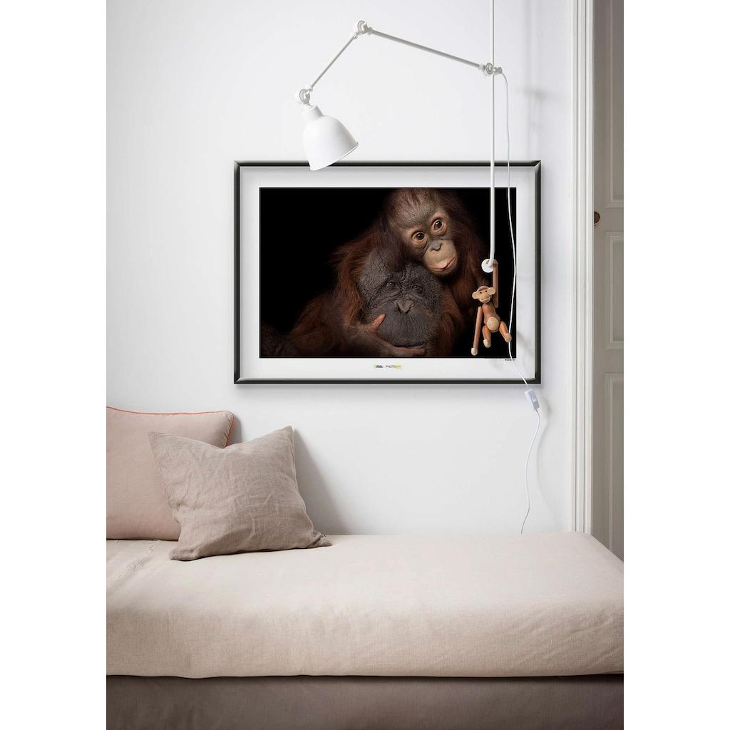 Komar Poster »Bornean Orangutan«, Tiere, Höhe: 40cm