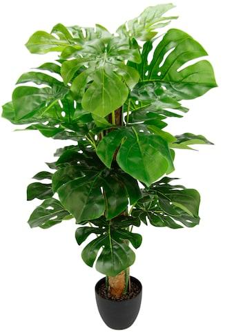 I.GE.A. Kunstpflanze »Splitphilopflanze« (1 Stück) kaufen