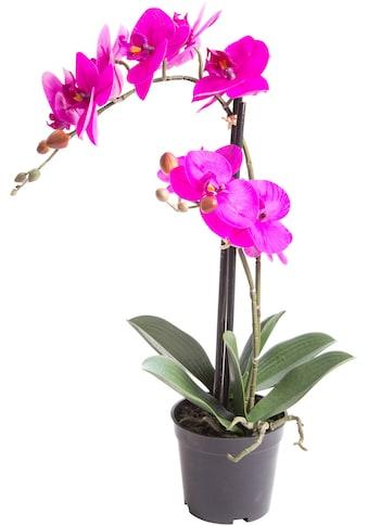 Botanic-Haus Kunstorchidee »Orchidee Bora« kaufen