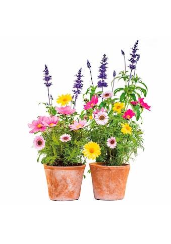 Komar Fensterbild »Blumen«, 31x31 cm, selbsthaftend kaufen