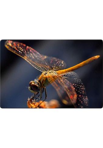 Glasbild »Dufour  -  Libelle auf Tuchfühlung« kaufen