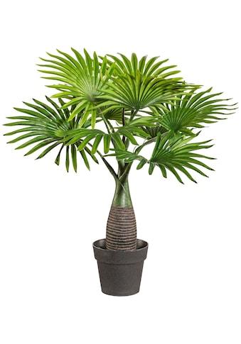 Creativ green Kunstpalme »Palme Mini«, im Kunststofftopf kaufen