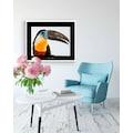 Komar Poster »Channel-billed Toucan«, Tiere, Höhe: 50cm