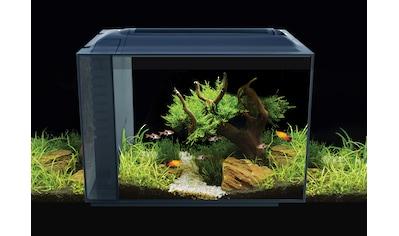 FLUVAL Aquarium »Spec XV 60«, BxTxH: 56x29x45 cm kaufen