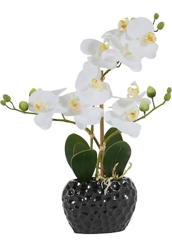 Leonique Kunstpflanze »Orchidee« kaufen