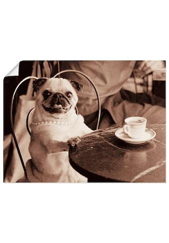 Artland Wandbild »Kaffee Mops«, Haustiere, (1 St.), in vielen Größen & Produktarten... kaufen