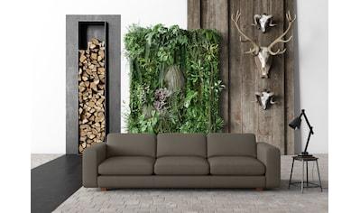 machalke® 4-Sitzer »valentino«, mit breiten Armlehnen, Füße Walnuss, Breite 266 cm,... kaufen