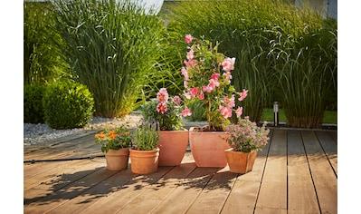 GARDENA Bewässerungssystem »Micro-Drip-System, 13005-20«, Erweiterungsset Pflanztöpfe kaufen