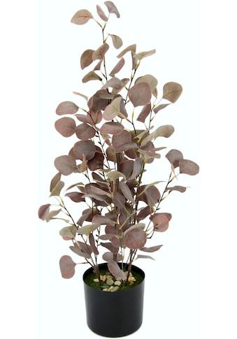 I.GE.A. Kunstpflanze »Eukalyptuspflanze« (1 Stück) kaufen