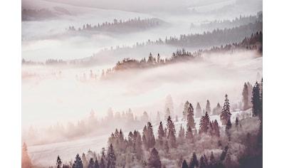 CONSALNET Papiertapete »Waldlandschaft im Nebel«, in verschiedenen Größen kaufen